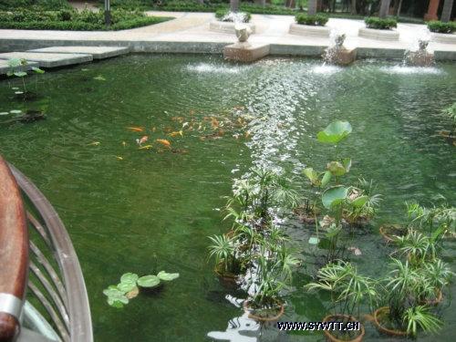 景观鱼池-水处理净化工程-生态 物理净化管理系统(2010年完工)
